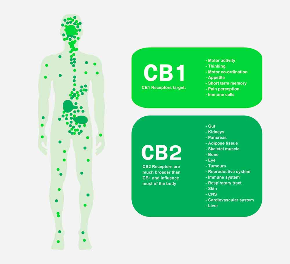 STENOCARE Endocannabinoidsystem